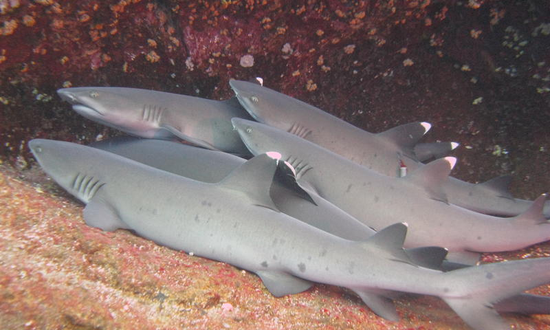 The Cave of the Sleeping Sharks