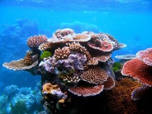 #1 Garrafon Natural Reef Park