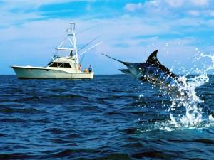 Fishing Tours Riviera Maya